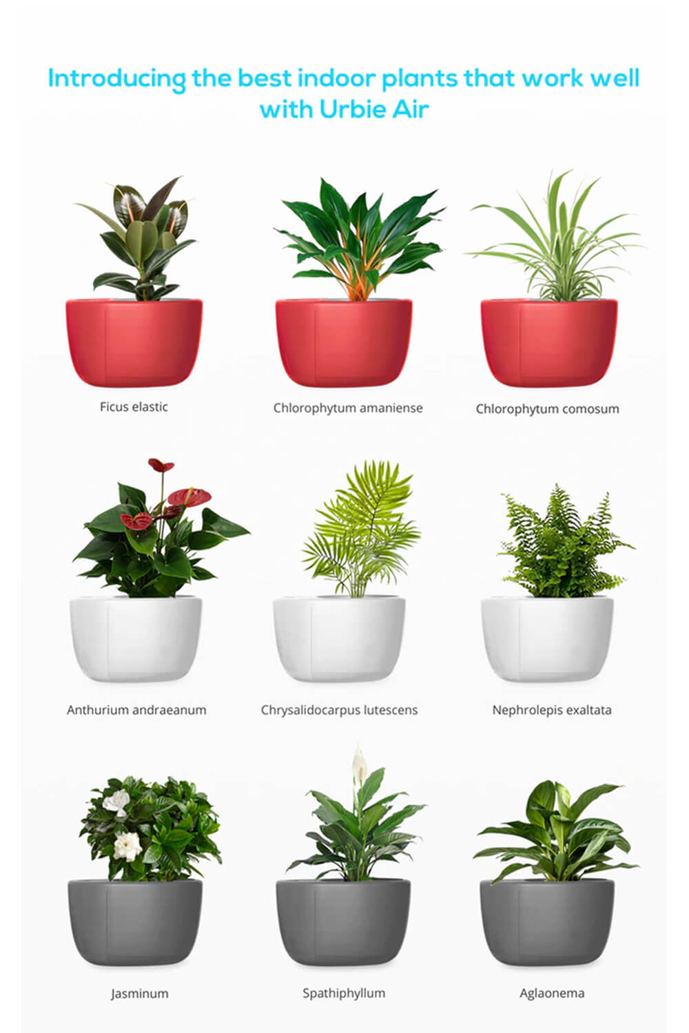 Urbie Air Purifier Compatible Plants